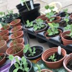 Learning to grow vegetables