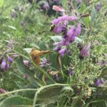Life Lessons from Nature – Weeds
